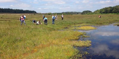 Grasses, Sedges and Rushes - Heathland, Acid Grassland and Bogs 2020