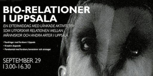 Uppsala: Att skapa rum för andra arter/ Making room for other species