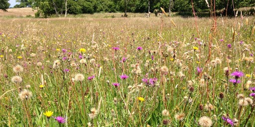Habitat Indicator Species (Phase 1 and NVC) - 2 day course 2020