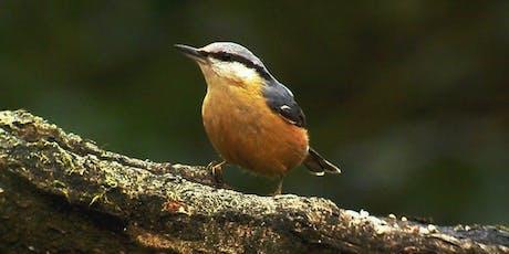 Birdwatching Classes: woodland birds tickets