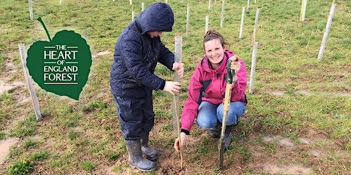 Family Tree Planting - Half Term Event