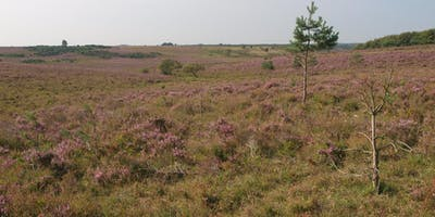 Habitat Indicator Species (Phase 1 and NVC) - Heathland, Acid Grassland and Bogs 2020