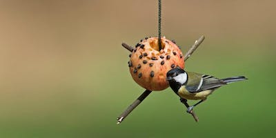 RSPB Bird Feeder Day