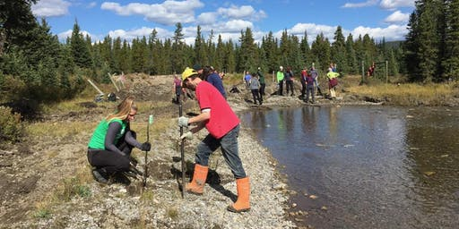 Bio-engineering at Silvester Creek