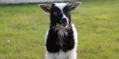 Lambing Basics and Q &A tickets
