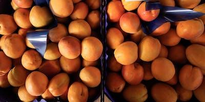 'albicocciamo' (let's apricot)
