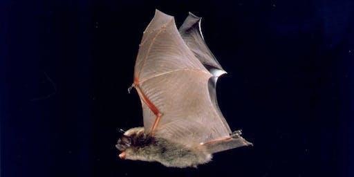 Batty About Bats!