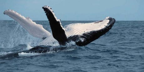 Question and Answer Session: Can We Save the Great Whales? tickets