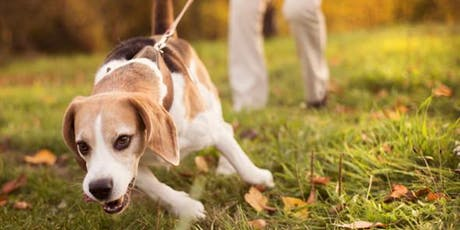 Teach Your Dog To Walk Nicely On Leash tickets