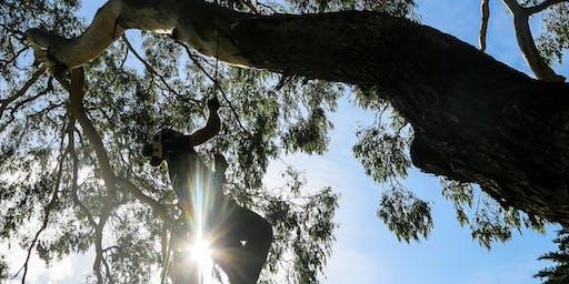 SRT Access (beginner) For Climbers