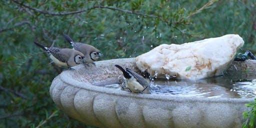 Birdscaping Baranduda