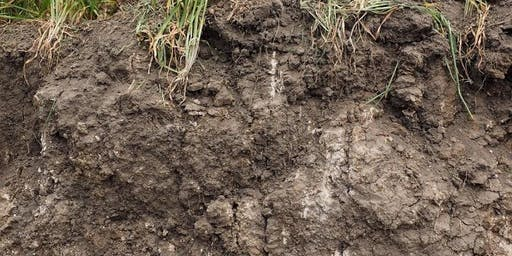 Understanding Soil Microbiology with Dr Pauline Mele