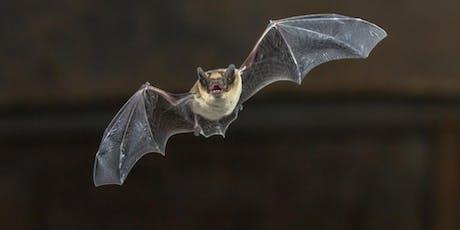 MoJ Biodiversity Day - Evening Bat Walk tickets