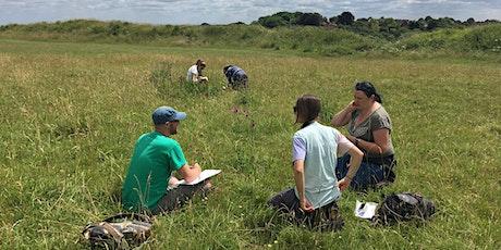 Midsummer Grass Identification 2020 tickets