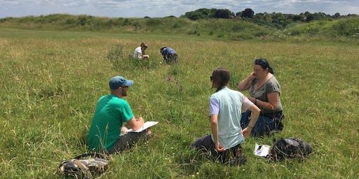 Midsummer Grass Identification 2020