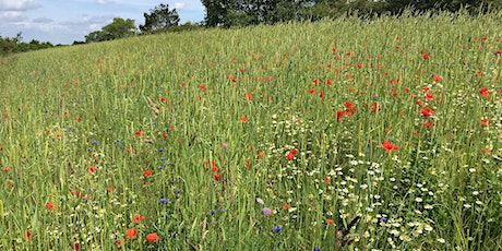 Arable Plant Identification and Ecology 2020 (Second Date) tickets