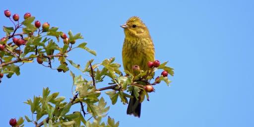 Farmland Bird ID at St Aidan's