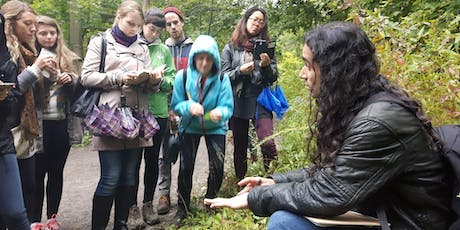 Wild medicinal & edible plant walk - High Park tickets