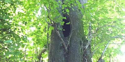 Assessing Trees for Bats 2020