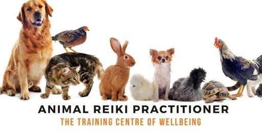 Animal Reiki Level 1 Training