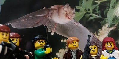 Bat Walk Leader Training