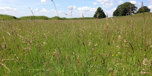 Late Season Grass Identification 2020