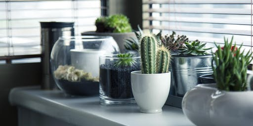 Urban Gardening - Caring for Houseplants, Succulents, and Terrariums