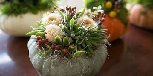 Thanksgiving Pumpkin & Succulent Workshop
