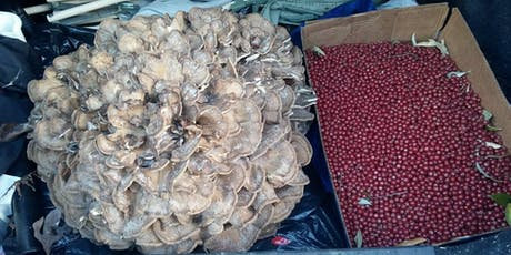 Autumn Foraging and Mushrooming tickets