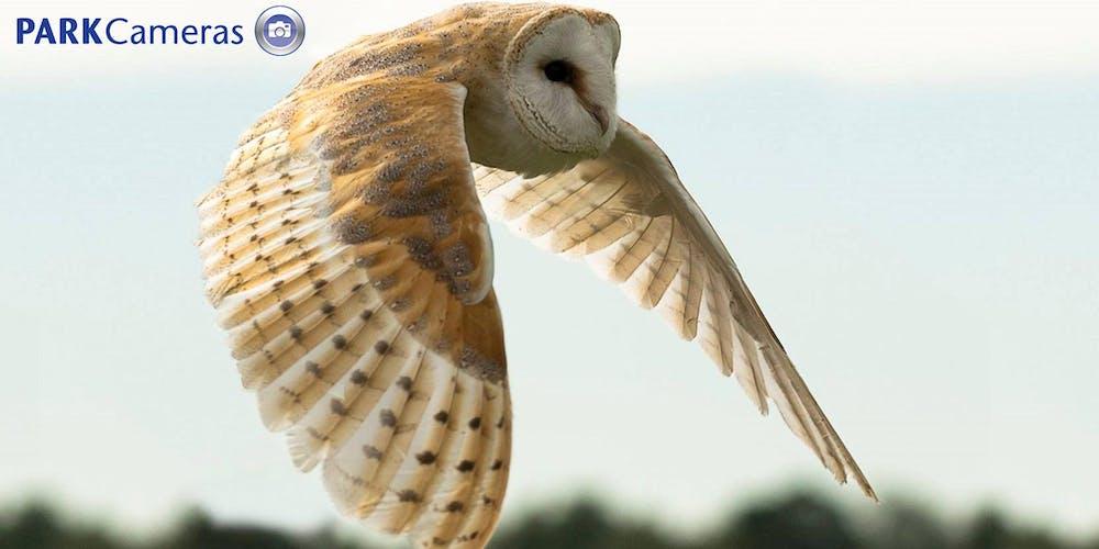 Birds of Prey Flying Display at Park Cameras Wildlife Day