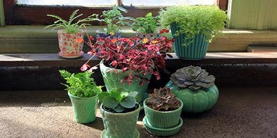Soil for Containers