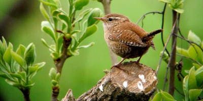 Birdwatching Classes: woodland birds