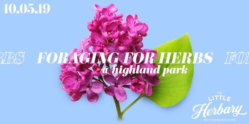 Foraging for Herbs : Medicinal Plant Walk Through Highland Park