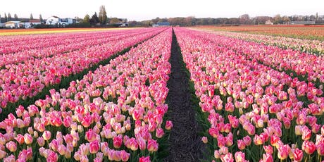 Ultimate Tulip Experience  tickets