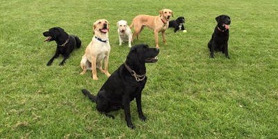 Life Skills Dog Training Course