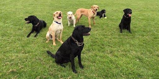 Life Skills Dog Training Course