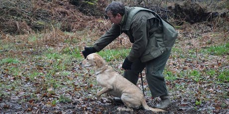 Sunday Morning Gundog Training Classes tickets