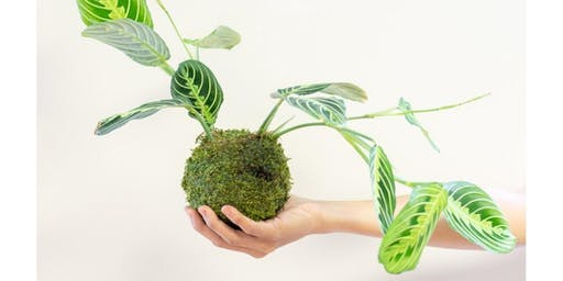 Kokedama (Japanese Moss Ball) Workshop