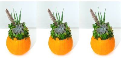 Succulents & Pumpkin Workshop