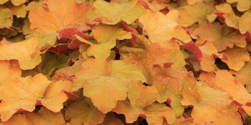 Fantastic Fall Foliage