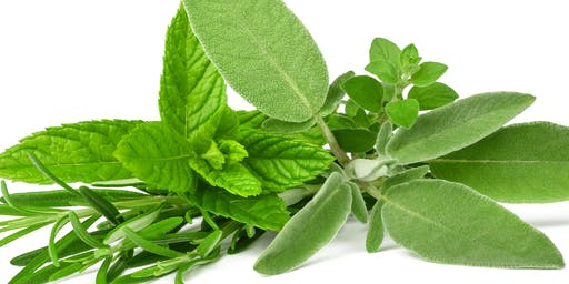 Demonstrations & Tasting by the Herb Society of America, New Orleans Unit