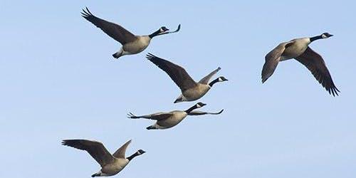 """Blue Goose Ontario, """"Member's Night"""""""