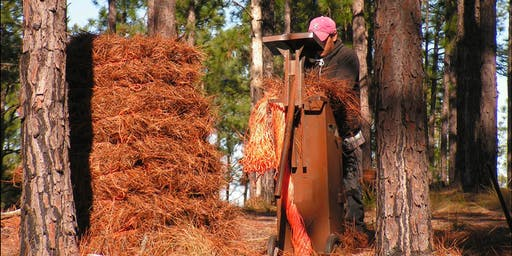 Pine Straw Management Workshop & Field Tour