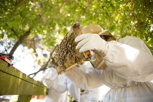 A Taste of Honey: What's All The Buzz About Urban Beekeeping?