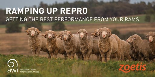 RAMping Up Repro PLUS MORE - OXLEY