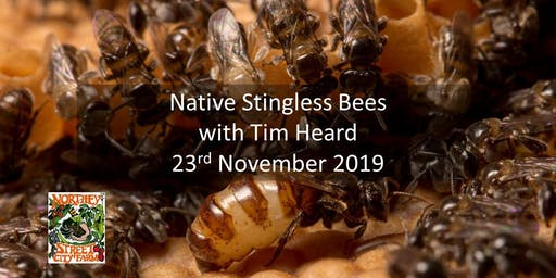 Native Stingless Bees with  Tim Heard