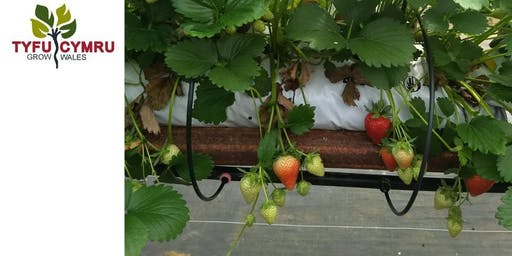 Tyfu Cymru Soft Fruit Engineering Workshop