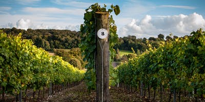 Hampshire Vineyard Tour & Wine Tasting