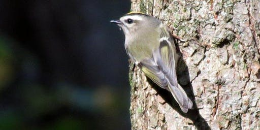 DC Audubon Society Bird Walk at Rock Creek Park (followed by Annual Meeting)