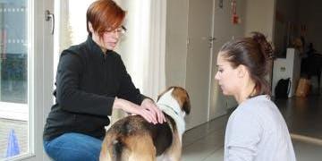 Massage, body & balance: jouw hond soepel en fit